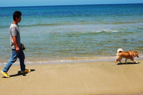 海岸に散歩