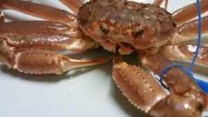 タブ付きブランド蟹