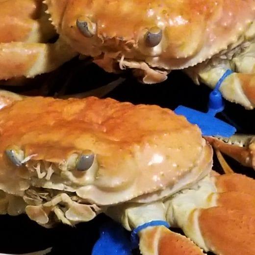 大松葉茹で蟹